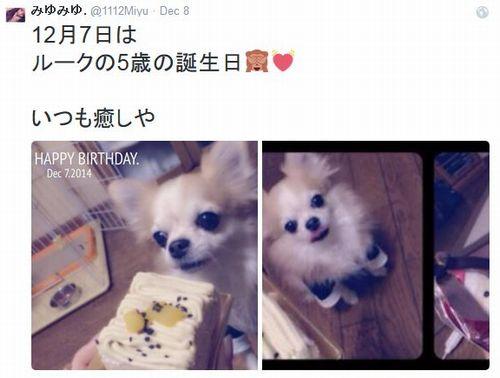 桜井美悠さんの愛犬ルークの画像