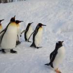 ファーストペンギンのイメージ